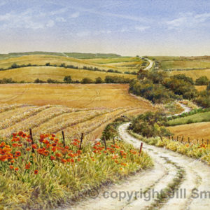 Hedgerow Poppies on the Ridgeway