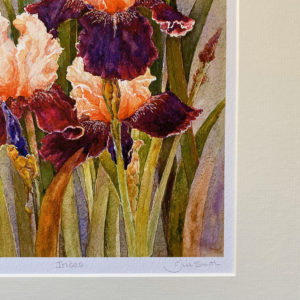 Irises (Giclée Print)